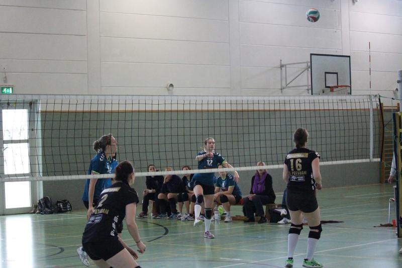 hsv cottbus volleyball